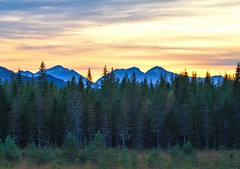 Evening Mood (bjorbrei) Tags: evening trees forest spruces dusk mountains molde norway