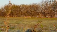 Deer On A Chilly Autumn Morning (larsongarden) Tags: deer kansas rural autumn morning buck