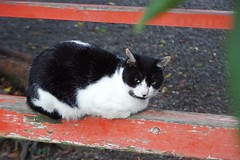 Today's Cat@2016-11-06 (masatsu) Tags: cat thebiggestgroupwithonlycats catspotting pentax mx1