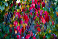 colorful leaves (mariola aga) Tags: autumn tree bush leaves motion blur color change red yellow green filter thegalaxy