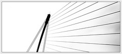 Dublin; Samuel Beckett Bridge (drasphotography) Tags: dublin ireland irland samuel beckett bridge brcke architecture architektur abstract abstrakt monochrome monochromatic monotone blackandwhite bw bn bianconero sw schwarzweis drasphotography nikond7000 d7k nikon minimal