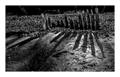 W A R M E R (frattonparker) Tags: nikond600 tamron28300mm raw lightroom6 isleofwight beach groyne reflections shadows shingle timbers mud sand btonner frattonparker monochrome