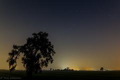 demaree tree-1 (troy_williams) Tags: longexposure night nightphotography xt1 fujixt1 rokinon14mm centralca oaktree fujishooters xseries xmount blue stars lightpollution farms fields manualfocus manualexposure silhouette wanderingpredawn lowlight