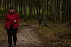 Taska with Temujin trailing (DidaK) Tags: germany rugen slomkowski taska beech forest trees