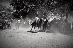 taming wild horses (rocami19) Tags: leica dlux5