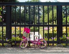 Princess Peach (Bas Tempelman) Tags: groningen prinsentuin prinsenhof prinsenhoftuin fiets bike bicycle childeren kinderfiets child girl pink fence hek green flowers