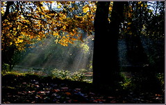 Heading home ... (* RICHARD M (Over 5.5 million views)) Tags: rays sunrays sunshine lightandshade shadows sunbeams autumn november dappled trees heskethpark southport sefton merseyside autumnleaves fallenleaves fall serenity nature mothernature scapes parks publicparks parkland pathway paths shadynook nook secluded sunlight shortcut peaceful peaceandquiet mist misty silenceisgolden atmosphere atmospheric shaftsofsunlight shaftsoflight