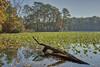 Autumn at the Pond (ByTheChesapeakeBay) Tags: nikond610 nikon2485mm benrotravelangeltripod aurorahdrsoftware capturenx2 fall fallcolors autumn
