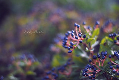 - (-LilyBeth) Tags: autumn autunno nature natura nikon d3000 dof depthoffield wonderfulworld bokeh colors outside light luce blu