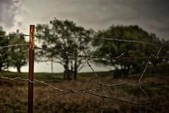 Forbidden Trees (KnightedAirs) Tags: d5200 nikon nikkor hdr high dynamic range 60mm afs oregon coast coastal tree barb wire fence farm land landscape