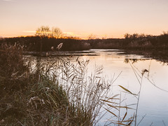 Bemensko jezero (Slobodan Siridanski) Tags: 2016 bara bemenskojezero surin vojvodina serbia