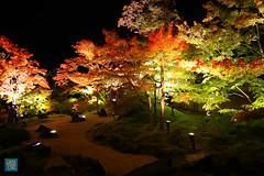 Tohoku 2016 - 508 (西文 Simon) Tags: 日本東北 miyagigun miyagiken 日本