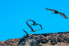 Chile 2013-3784 (sebtac) Tags: chile2013 chile 2013 outdoor 13 reserva nacional pingüino de humboldt