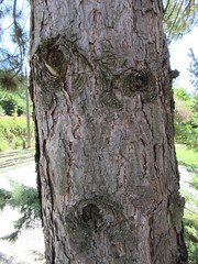 Do you see a face? (jamica1) Tags: canada pareidolia bc nelson columbia british