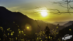 Mountain Sun (TGB Filmography) Tags: flowers sunset mountains tree love silhouette clouds lost outdoors countryside colorful peace tennessee country peaceful grateful mountainside smokymountains pictureperfect thegreatsmokymountains timestops