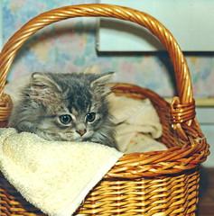 00385 (d_fust) Tags: cat kitten gato katze  macska gatto fust kedi  anak katt gatito kissa ktzchen gattino kucing   katje     yavrusu