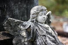 Week 44: Cemetery/Graveyard - Broken Wings (Fiona Dawkins) Tags: broken cemetery graveyard angel brokenwings weepingangel week44theme 52weeksthe2015edition week442015 weekstartingthursdayoctober292015