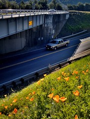 where bowers of flowers bloom in the sun, Niles Canyon Road / Route 84 at Main Street, Sunol, February 21, 2015 (/\/\ichael Patric|{) Tags: california flowers sunlight flower floral car northerncalifornia truck underpass geotagged highway day afternoon overpass sunny pickup pickuptruck poppy poppies sanfranciscobayarea bayarea eastbay sfbayarea february westcoast californianpoppy californiapoppy alamedacounty sunnyday route84 stateflower sunol goldenpoppy sunolvalley 2015 highway84 michaelpatrick statehighway alamedacountycalifornia address:continent=northamerica address:country=unitedstatesofamerica address:state=california sunolcalifornia geo:lon=1218893 stateroute84 californiastateroute84 prohdrcamera february2015 address:street=nilescanyonroad address:postalcode=94586 address:city=sunol geo:lat=375934