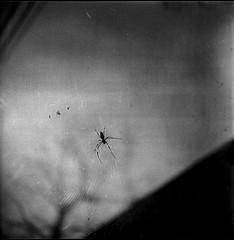 0557 (nori 4_4) Tags: spider ii rolleicord proxar 7535 triotar