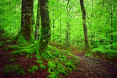 En algun lugar (arbioi) Tags: naturaleza verde camino bosque montaa euskalherria navarra nafarroa eugi urkiaga gr12 eos40d esteribar kintoreal enekorri zagua