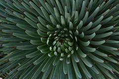 Eze (16) (Pier Romano) Tags: costa france village eze alpi francia borgo medio evo giardino provenza pianta storico azzurra grassa esotico marittime