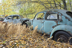 VW Graveyard (Jonnie Lynn Lace) Tags: abandoned abandonedamerica abandonedgraveyard abandonedcar abandoendcars abandonedvw volkswagen decay decayed decaying chasinglight derelict peelingpaint paintchips rust rustycar car orange blue fall cars automne usa america urbex explore exploration roadtrip haikyo naturetakesover classic october nature yellow trees old