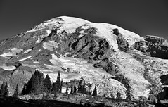 Mount Rainier Coming Up Over the Rise (Black & White, Mount Rainier National Park) (thor_mark ) Tags: 14158feet 4315meters alpinemeadow blackwhite blueskies capturenx2edited cascaderange colorefexpro columbiacrest day4 evergreentrees evergreens gibraltarrock glacialdebris glacier glaciers hikingupthesideofmountrainier hillside hillsideoftrees lookingnnw mountrainier mountrainierarea mountrainiermassif mountrainiernationalpark mountains mountainsindistance mountainsoffindistance nature nikond800e nisquallyglacier pacificranges pointsuccess portfolio project365 skylinetrail snowcapped southwashingtoncascades stratovolcano trailsaroundparadiseinn trees triptomountrainierandcolumbiarivergorge wa unitedstates