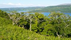 Taynish NNR & Loch Sween (Niall Corbet) Tags: scotland argyll taynish nationalnaturereserve nnr lochsween forest woodland oak quercus