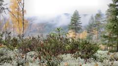 20161026098493 (koppomcolors) Tags: koppomcolors forest skog