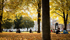 enjoying the leaves (Robin Niedojadlo) Tags: light autumn colour brown leaves happy sun city parks life fun