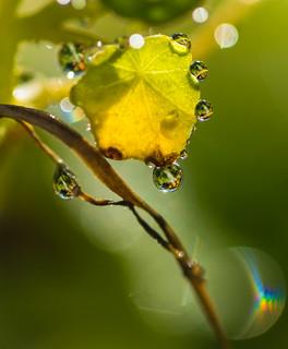Backlit Waterdrops