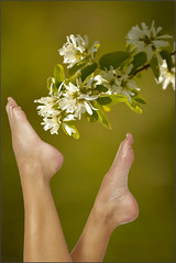 Foot Feeling (swong95765) Tags: flowers bokeh feet peasoup toes white pretty beauty creamy foot extended