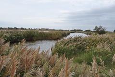 Aigues-Mortes (Chaufglass) Tags: aiguesmortes gard étang occitanie languedoc landscape eau lagune graminées zonehumide