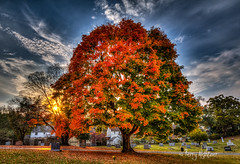 Sugar :-* Maple -- Evergreen Cemetery Roanoke [Explore! 11-11-2016] (Terry Aldhizer) Tags: sugar maple evergreen cemetery roanoke tree fall autumn colors sun shine evening terry aldhizer wwwterryaldhizercom