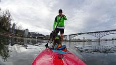 SUP and PUP (Kayaker Bill) Tags: select sup standuppaddle oregon portland willametteriver schnauzer sonyas100v bridges rossislandbridge