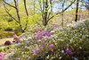 _MG_4467 (TobiasW.) Tags: spring frühling fruehling garden gardenflowers gartenblumen gärten garten blue mountains nsw australien australia backyard public