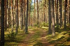 *** (pszcz9) Tags: polska poland przyroda nature natura las forest droga road pejza landscape wiosna spring beautifulearth sony a77