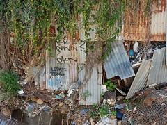 Third World Adelaide (mikecogh) Tags: ashford messy corrugatediron creeper vine rubbish rust fence dilapidated bulging