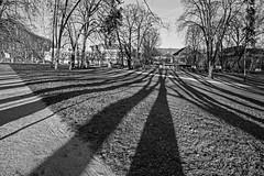 Shadowy Besançon - France [Explored 03-12-16] (Bon Espoir Photography) Tags: besançon franchecomte france city unesco victorhugo shadows lawn park trees buildings blackandwhite lines path nikond750