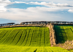 HORIZON HEDGE. (CWhatPhotos) Tags: cwhatphotos camera photographs photograph pics pictures pic picture image images foto fotos photography artistic that have which contain with olympus four thirds 43 hartlepool cleveland north east england sunny day blue sky skies color colour colors colours green field cloud cloudy clouds above hedge hedges