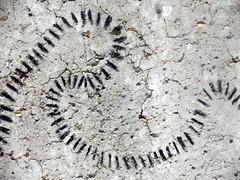 Trail On Concrete (Quetzalcoatl002) Tags: trail strange concrete streetart winding closeup