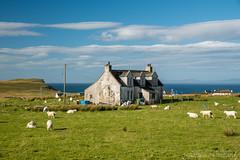 Kilmuir house, Isle of Skye (Fabien Guittard) Tags: animal architecture automne fall landscape maison mammal mammifère mouton nature paysage sheep travel voyage highlands scotland écosse skye
