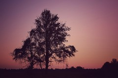 """slipstream fiction (listening to """"the winter"""", balmorhea) (jeneksmith) Tags: pink purple canon mississippi tree silhouette sunset sky color twilight gloaming nature natural"""