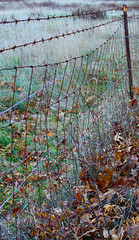 Fence (Kris_wl) Tags: fence barbed wire rested rusty rusted rust antique rustic farm outside ourdoors gate barier barrier fencing barbedwire obstruction brown dried leaves leaf