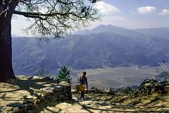 Basket Man (Hubert Streng) Tags: man tree view himalaya pokhara sarangkot path