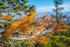Bryce Canyon (joshbousel) Tags: bristleconeloop bristleconelooptrail bryce brycecanyon brycecanyonnationalpark nationalpark northamerica places travel unitedstates unitedstatesofamerica usa ut utah