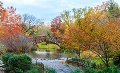 Fall scene, Gapstow Bridge, Central Park, New York City (peripathetic) Tags: 2016 5d 5dmk3 5dmkiii america canoneos5dmk3 fall nyc newyorkcity us usa unitedstates autumn bridge canon centralpark gapstowbridge leaves manhattan manhattanisland newyork