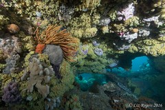 Colourful Lonsdale Wall (Liz_Rogers) Tags: featured image ocean diving reef lonsdale wall rebreather scuba temperate underwater photography