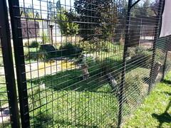 20150919_114546 (mjfmjfmjf) Tags: oregon zoo 2015 greatcatsworldpark