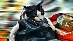 My cat (luiz2031) Tags: